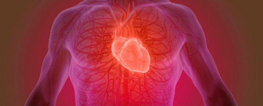 do-we-really-only-get-a-certain-number-of-heartbeats-in-a-lifetime-heres-what-science-says (1)